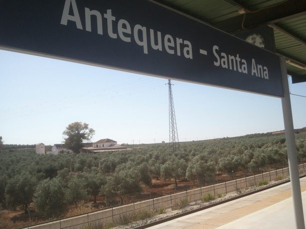 Olive trees in Antequera