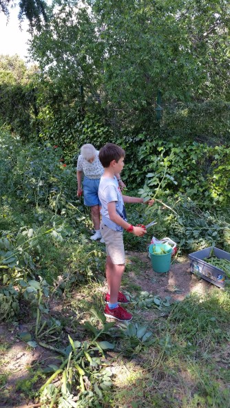"""Jimmy and mom picking """"haba"""" beans in La Navata, they were delicious!"""