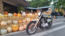 Rocinante enjoying some Fall pumpkins in tropical Florida