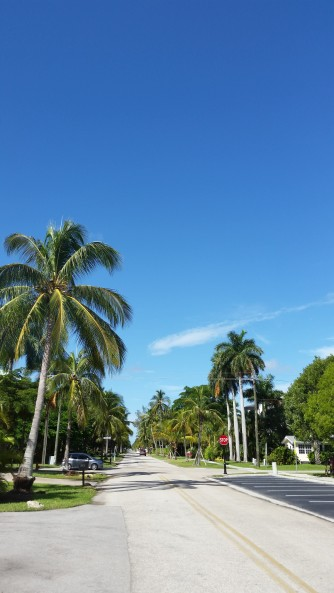 Beautiful palm lined streets