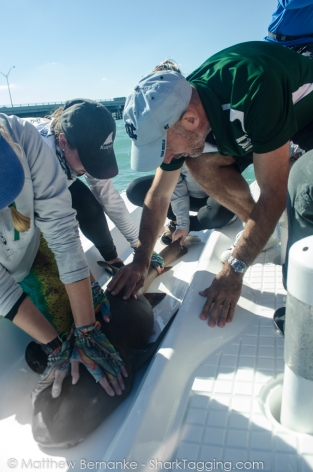 Nurse sharks skin feels like sandpaper!