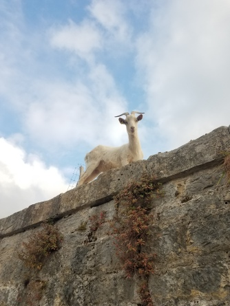 One always makes new friends on the Camino